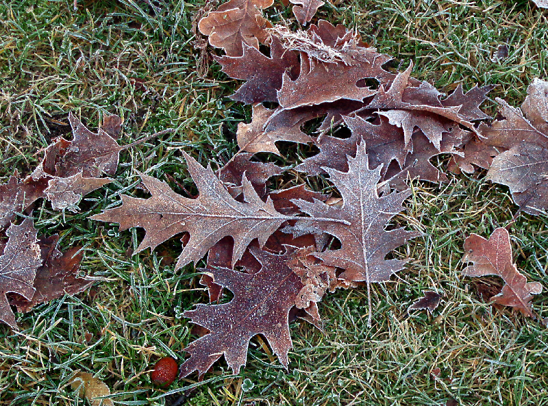 Dec-11-leaves.jpg